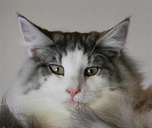 Katterna 009