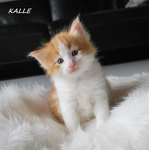Kalle 4v b