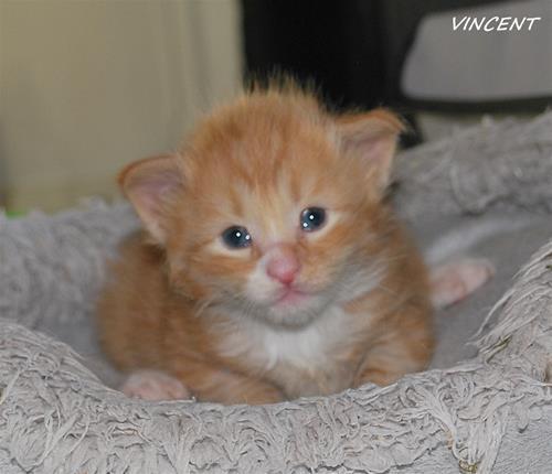 Vincent 3v