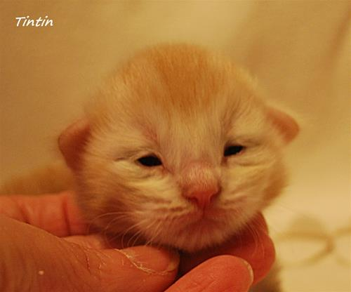 Tintin 9 dagar b
