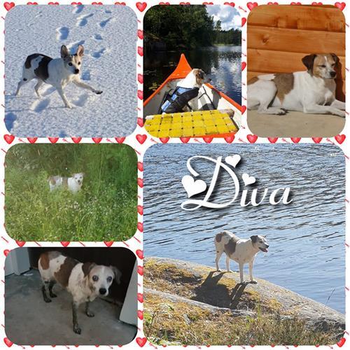 diva17