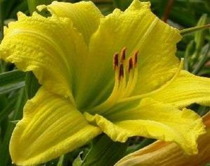 (Kon2)Hem Green flutter