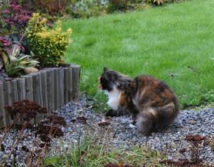 Katten Smulan