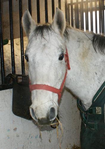 Pony szellöstall