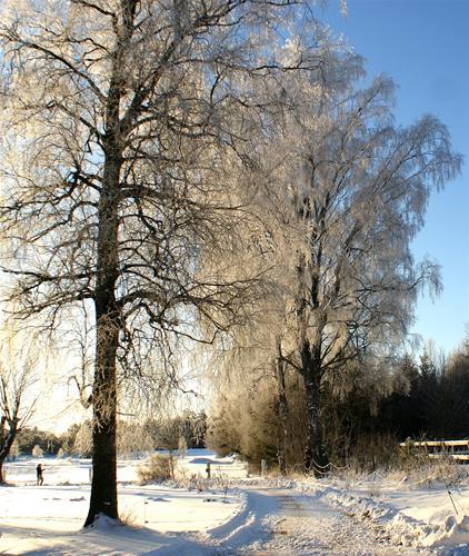Vinter2012-3