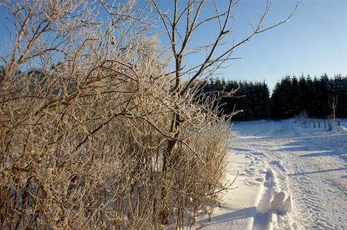 Vinter2012-1