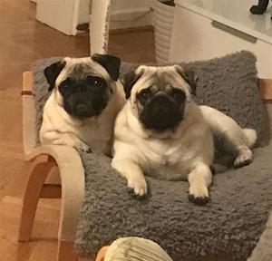 Harriet och Kotte