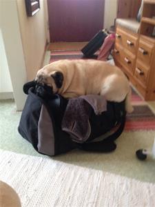 Daisy på väska