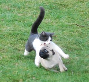 Harriet leker med katten2