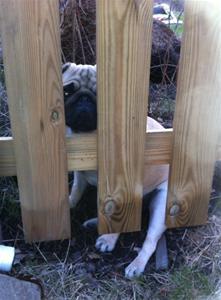 Harriet staket