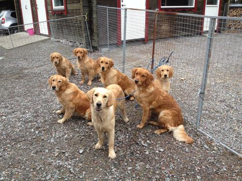 Hundar1