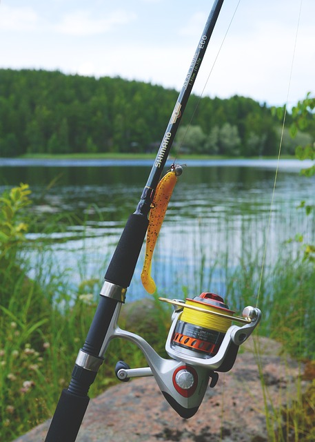 fish-887523_640