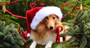 hund-som-jultomte-2