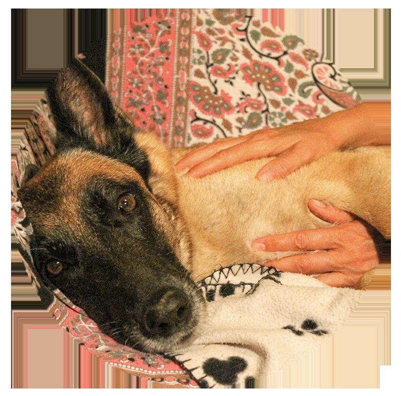 Hundmassage nynäshamn, södertörn