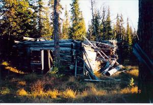 Skogshuggar koja med stall vid Kiltejåkka 300 m från Råneträsk