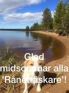 Kimmo och Karins hund hälsar