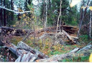Skogshuggar koja med stall vid Harrijåkkå i Yli-Kadderova
