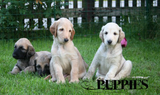 Gallery PUPPIES