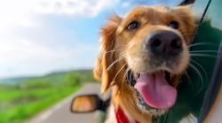 Sænk varmen i bilen med solfilm