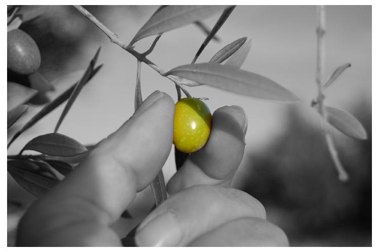 Konsten att välja en bra olivolja