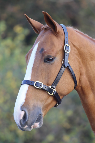 Blenheim Fully Adjustable Leather Headcollar