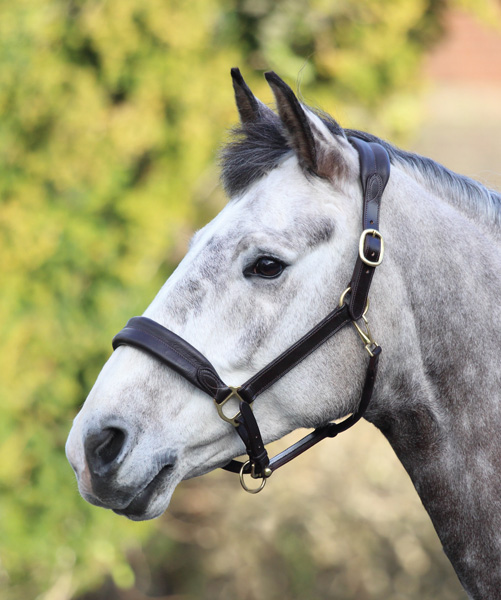 Blenheim Cushioned Travel Headcollar