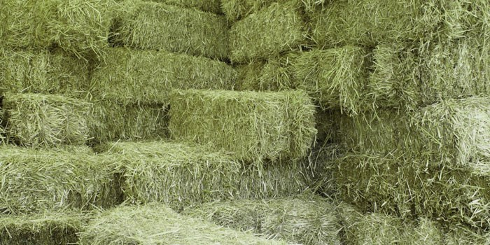 Grovfoderanalys