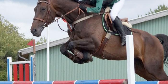 SuperCondition®- koncentrerad, lätttillgänglig energi till högpresterande tävlingshästar samt i avel/under avelssäsong - 5 kg