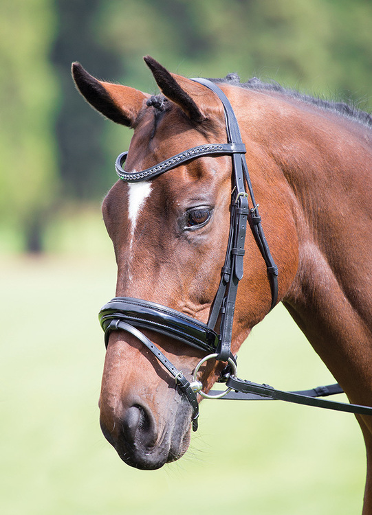 Aviemore Diamante Dressage Bridle