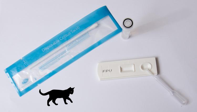 FPV Parvovirus Snabbtest Katt  x 10