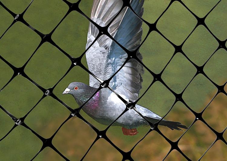 Fågelnät säljes efter önskad mått och beställning.