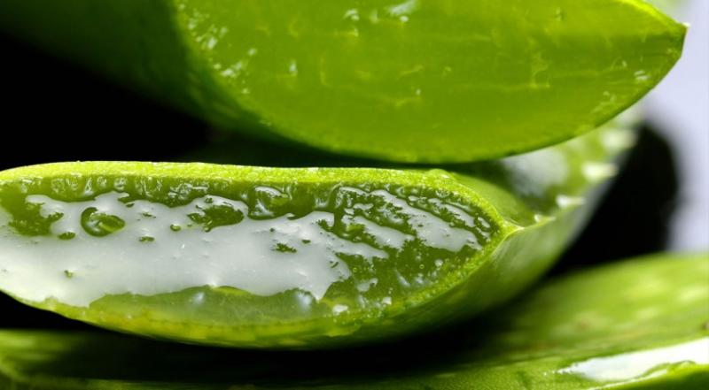Aloe Vera - oändligt med hälsofördelar
