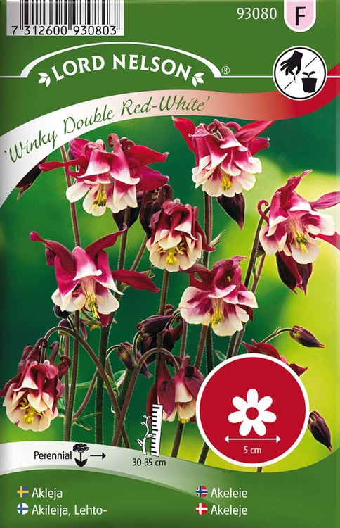 Akleja, Winky Double Red-White