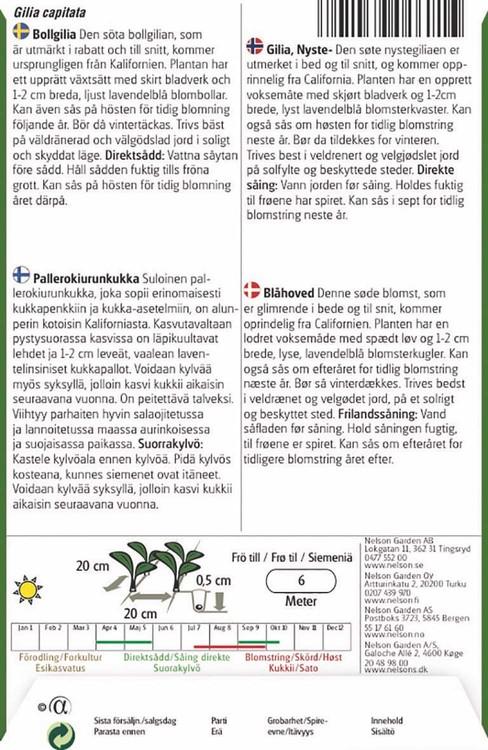 Bollgilia, lavendelblå