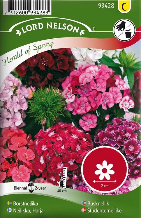 Nejlika, Borst-, Herald of Spring