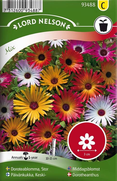Doroteablomma, Stor, bl.färger