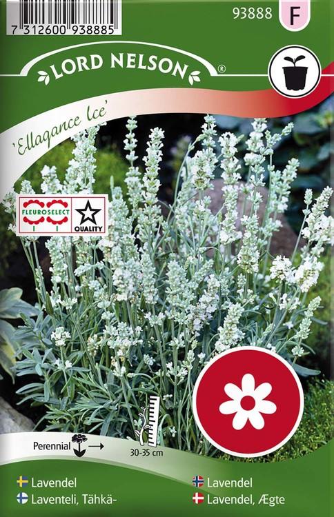 Lavendel, Ellagance Ice, vit