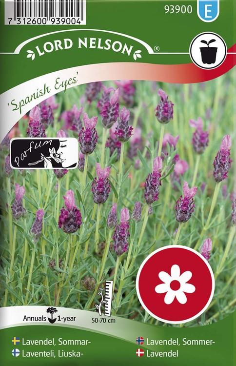 Lavendel, Sommar-, Spanish Eyes