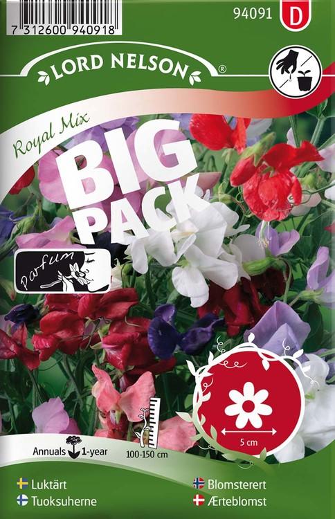 Luktärt, Royal, bl.färger. Big Pack