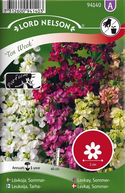 Lövkoja, Sommar-, Ten Week, bl färger