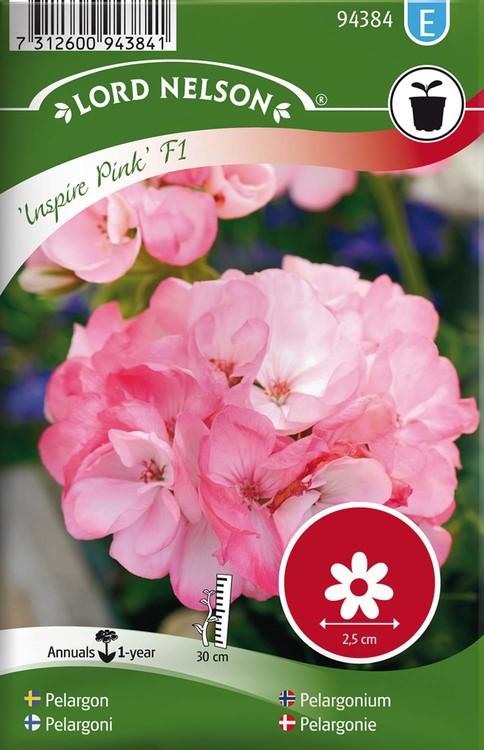Pelargon, Inspire Pink F1, rosa