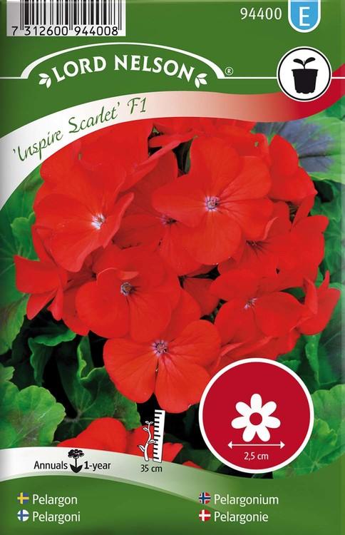 Pelargon, Inspire Scarlet F1, röd