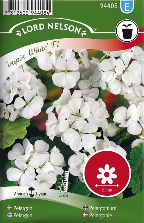 Pelargon, Inspire White F1, vit