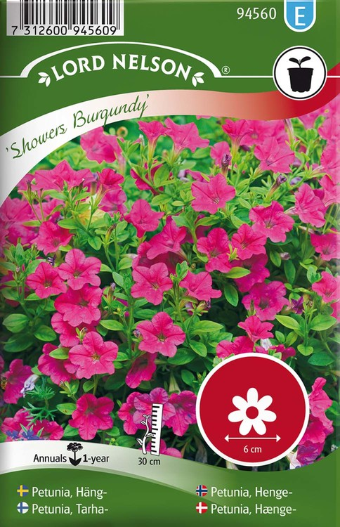 Petunia, Häng-, Showers Burgundy