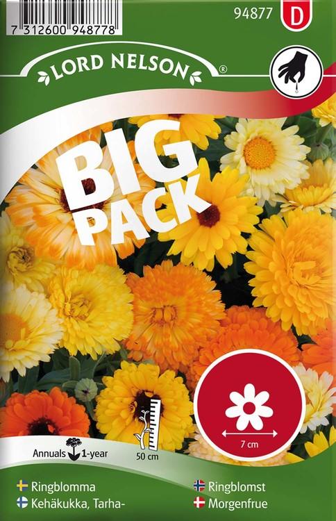 Ringblomma, blandade färger, Big Pack
