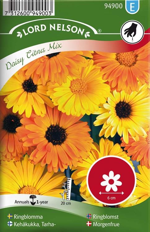 Ringblomma, Daisy Citrus Mix, låg