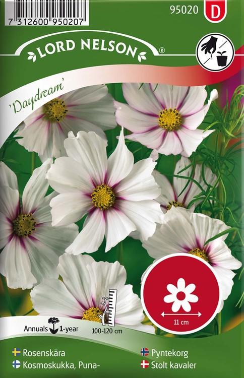 Rosenskära, Daydream