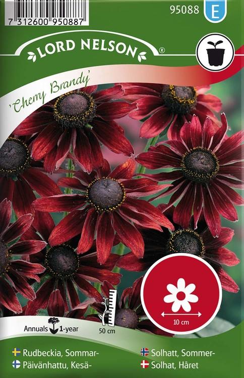 Rudbeckia, Sommar-, Cherry Brandy