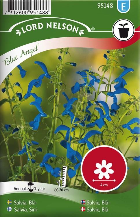Salvia, Blå-,  Blue Angel
