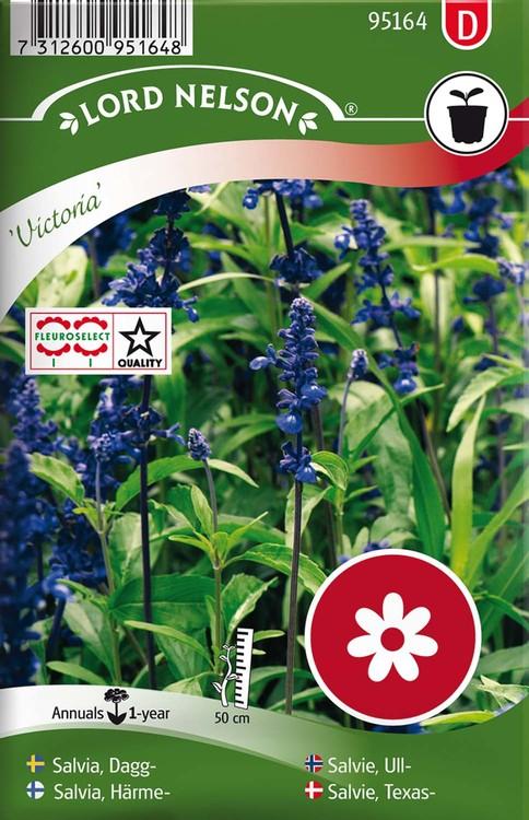 Salvia, Dagg-, Victoria, blå